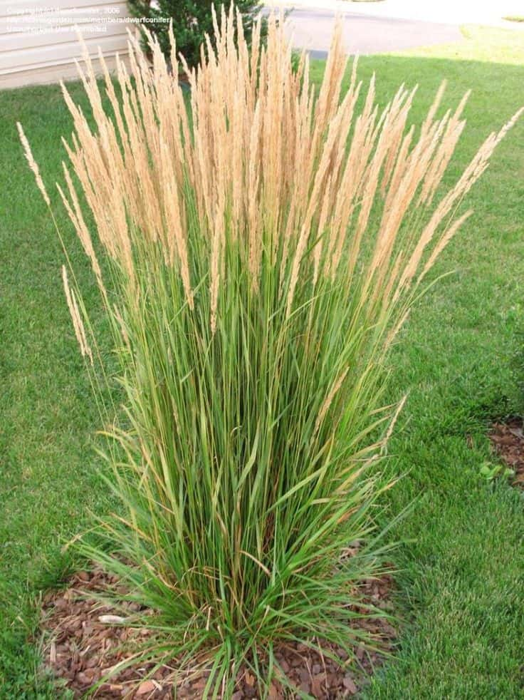 ornamental-grasses - Sun Valley Landscaping