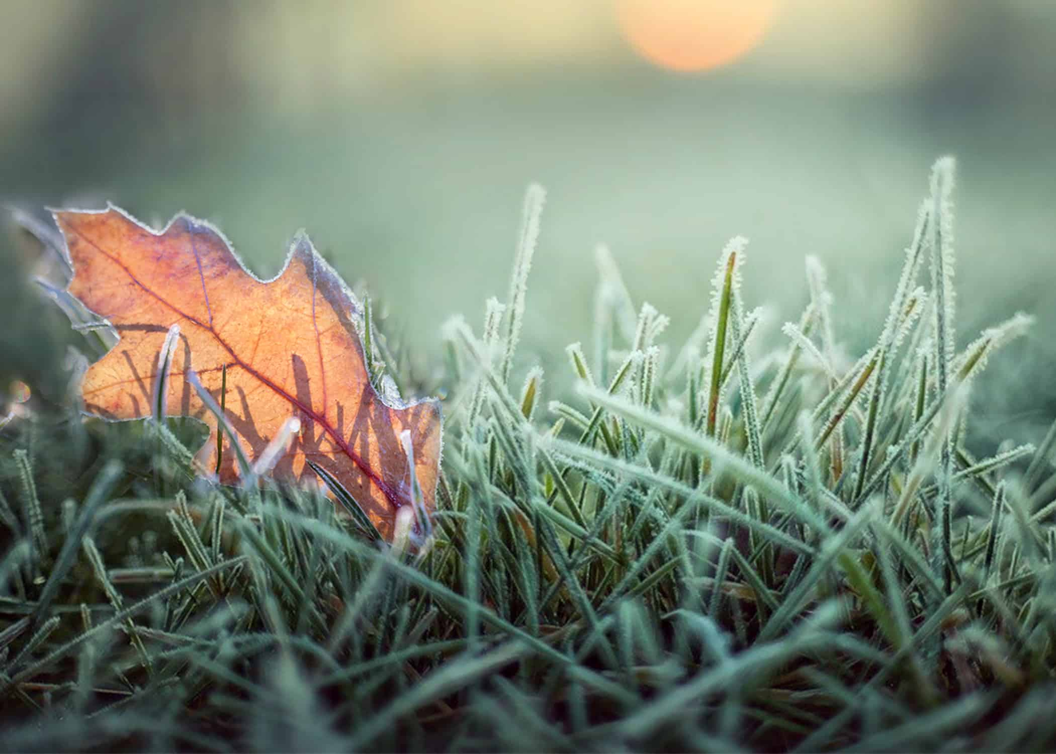 Fall leaf with frost