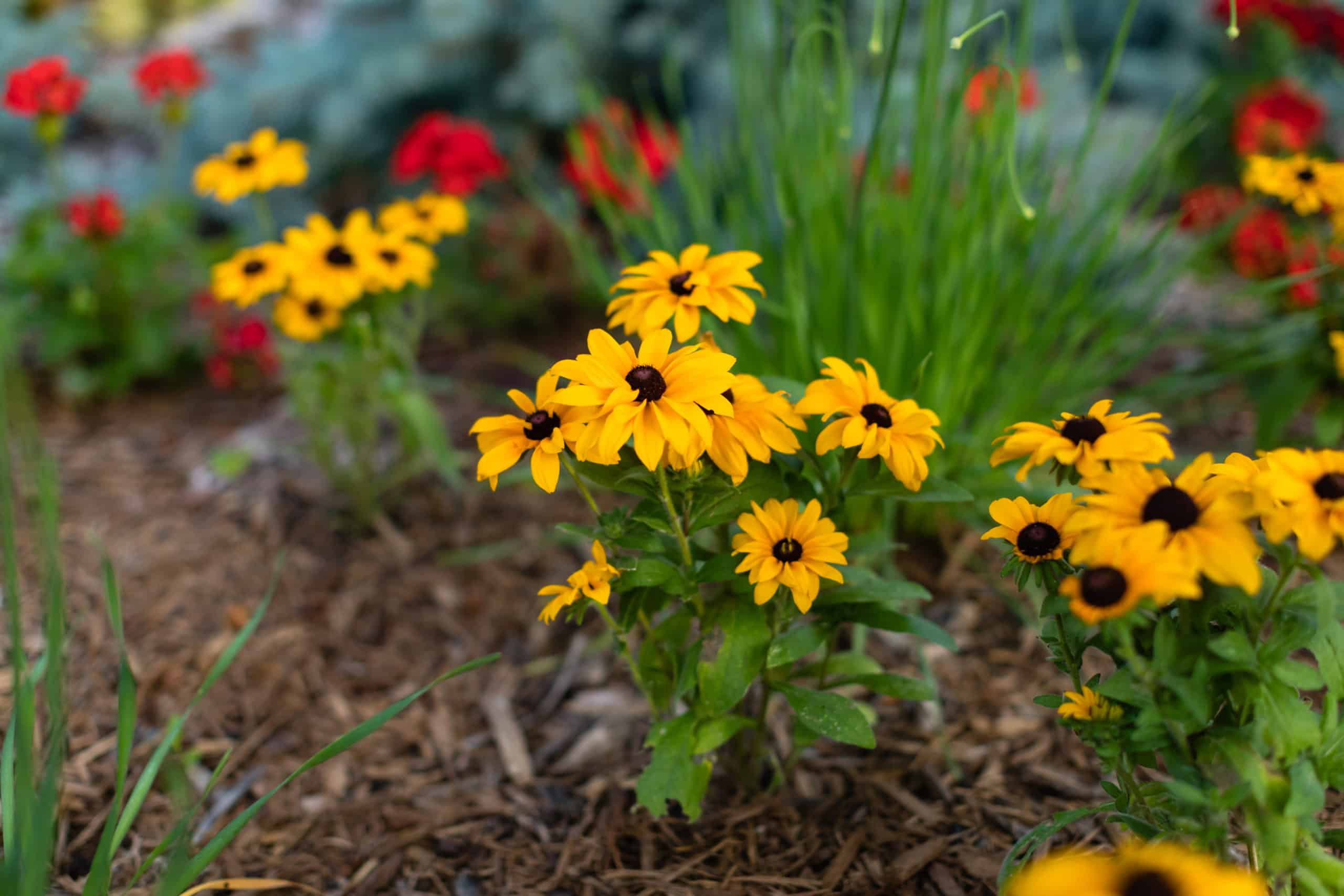 flowers and mulch